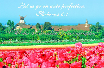 HEBREWS 6:1 CARLSBAD FLOWER FIELDS