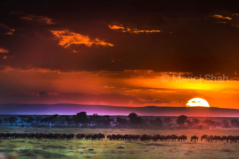 Migration at Sunrise