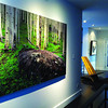 "48x96 ""Spring Aspen Forest"", Private Residence, Chicago, Illinois"