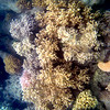 Great Barrier Reef, Australia underwater coral pictures