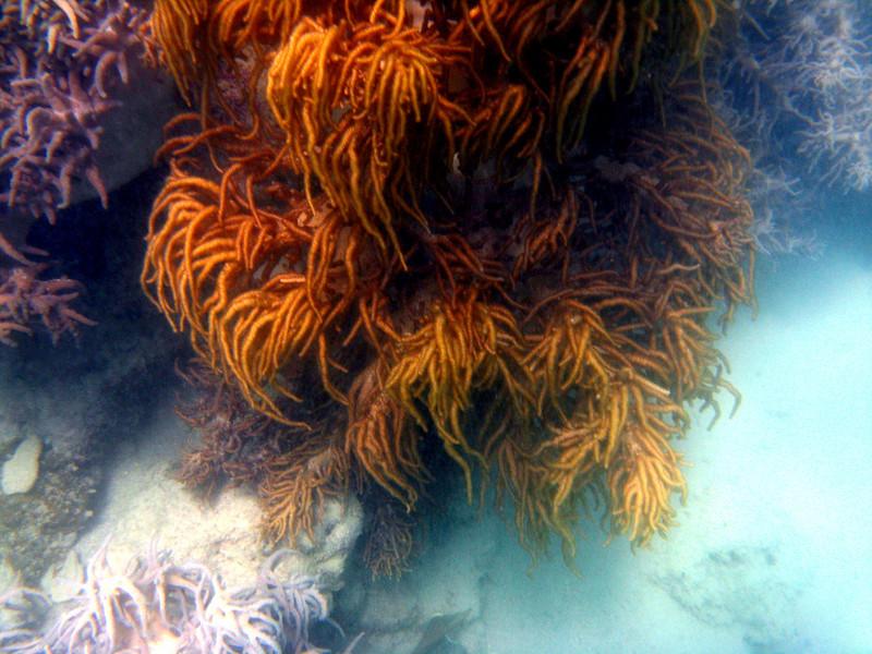Great Barrier Reef, Australia underwater coral pictures