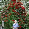 Christchurch to Queenstown, New Zealand flowers christchurch botonical gardens