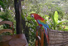 parrot Amazon river lodge dining room