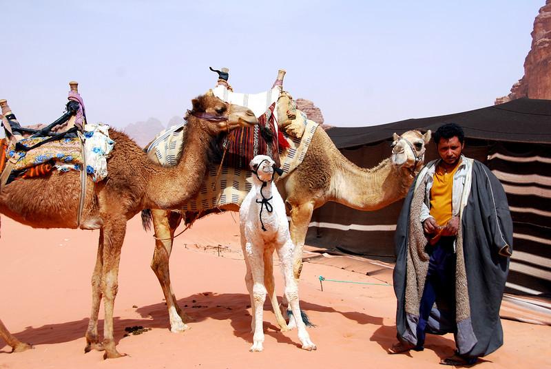Wadi Rum Jordan