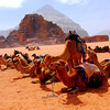 camel pictures  Wadi Rum, Jordan, Land of Lawrence of Arabia