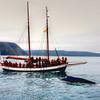 2011  Hump Back whale, Iceland