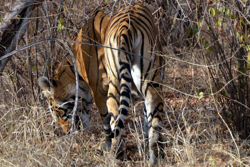 Ratnthambore Tiger Reserve