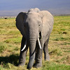 Amboseli National Park, Africa