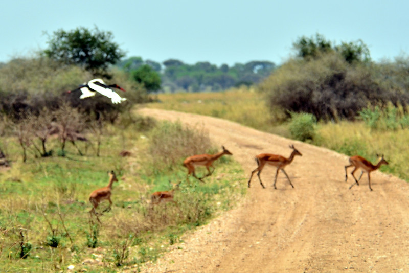 MBALANGETI LODGE, AFRICA, NGORONGORO CONSERVATION AREA