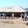 Nagaur Camel Festival India