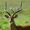 Africa Animal Picturs