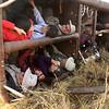 MASAI MARI BALLOONING 2012