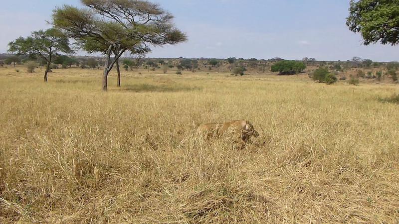 Tanzania (/ˌtænzəˈniːə/),[12] officially the United Republic of Tanzania (Swahili: Jamhuri ya Muungano wa Tanzania), is a country in eastern Africa within the African Great Lakes region