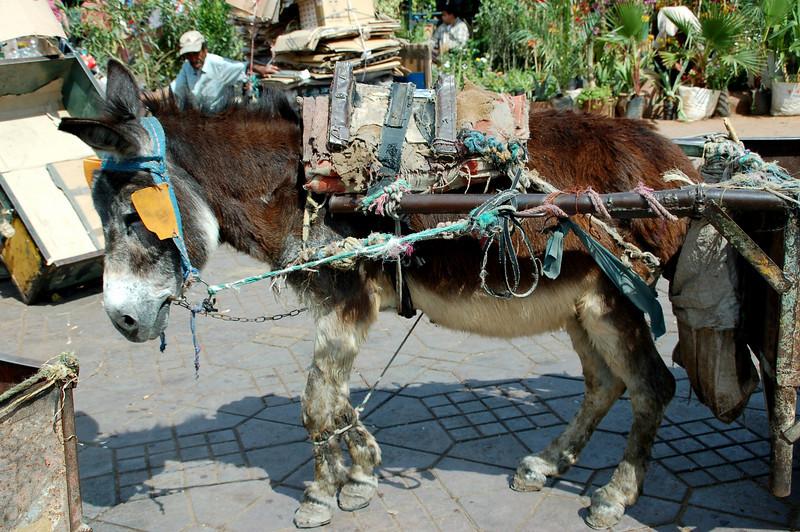 Djemaa el Fna Square market  Marrakesh berber