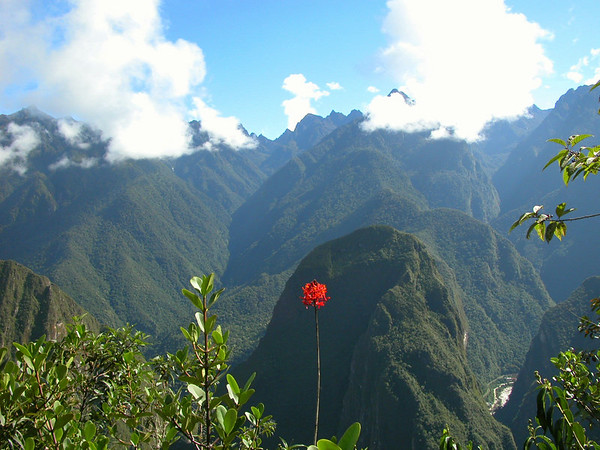 flower on the top of machu piccu UNESCO WORLD HERITAGE SITE<br /> photo by Betty Carlson and Andy Rabatin