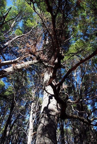 Bariloche, Argentina,  Basque de Arrayanas forest