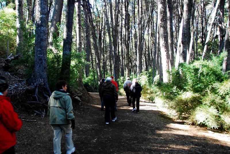 Bariloche, Argentina  Basque de Arrayanas forest