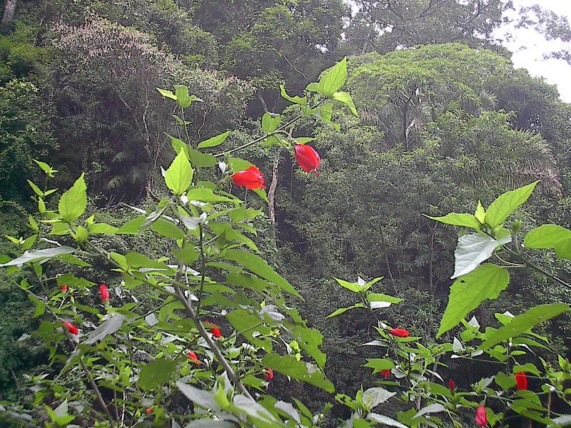 part of the rainforest Rio Brazil