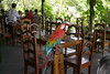 bird in dinning lodge from the amazon forest