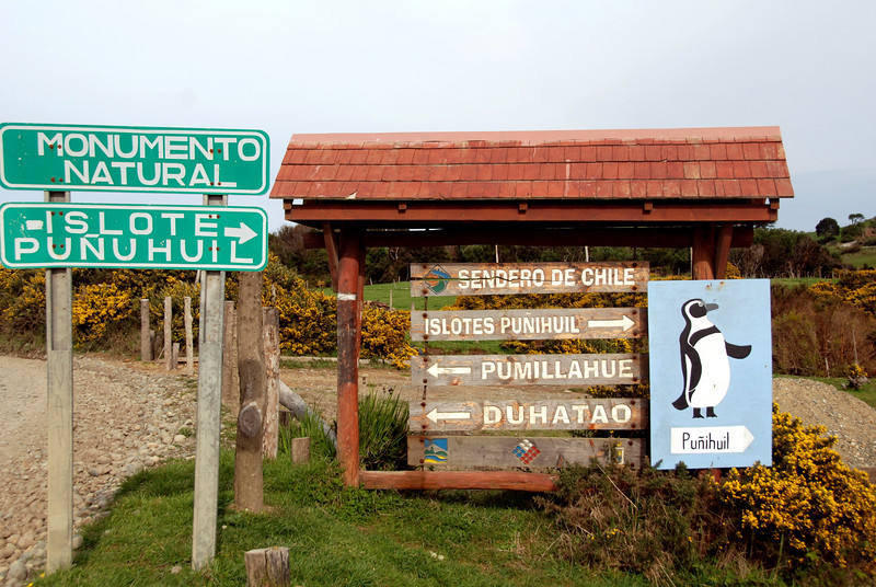 Punuhuil Wildlife Sanctuary, Puerto Varas,Chile