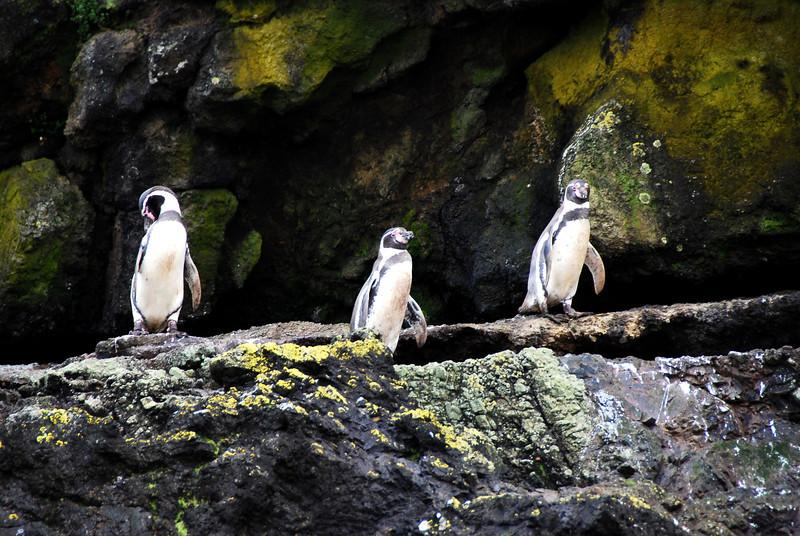 Punuhuil Wildlife Sanctuary, Puerto Varas,Chile
