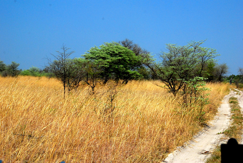 view of the brush on a game drive, Namibia, Africa
