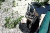 PENGUINS IN SOUTH AFICA