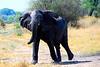 Moremi Game Reserve, Botswana in the Okavango Delta