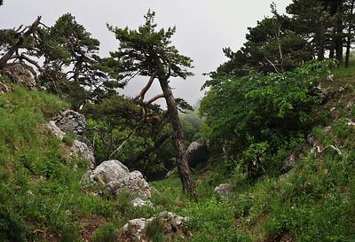 Panorama 57