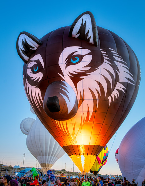 Wes the Wolf Balloon - John O'Neill Photography