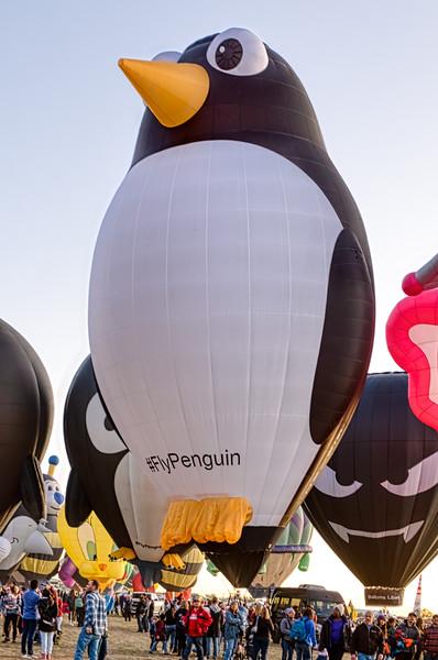 Penguin 1 - John O'Neill Photography