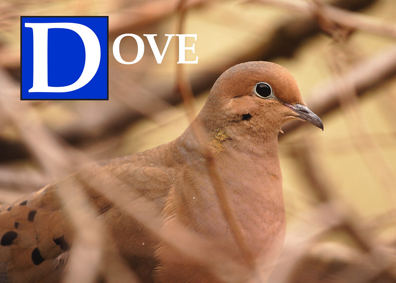 D is for Dove
