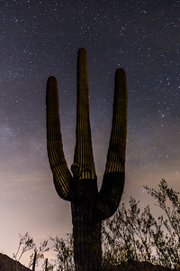 Saguaro at Night