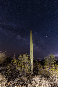 Cactus at Organ Pipe