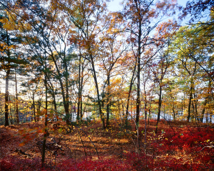 Walden Pond from the Lincoln Hills