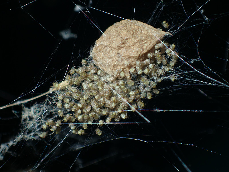 July 1 2014  Baby spiders