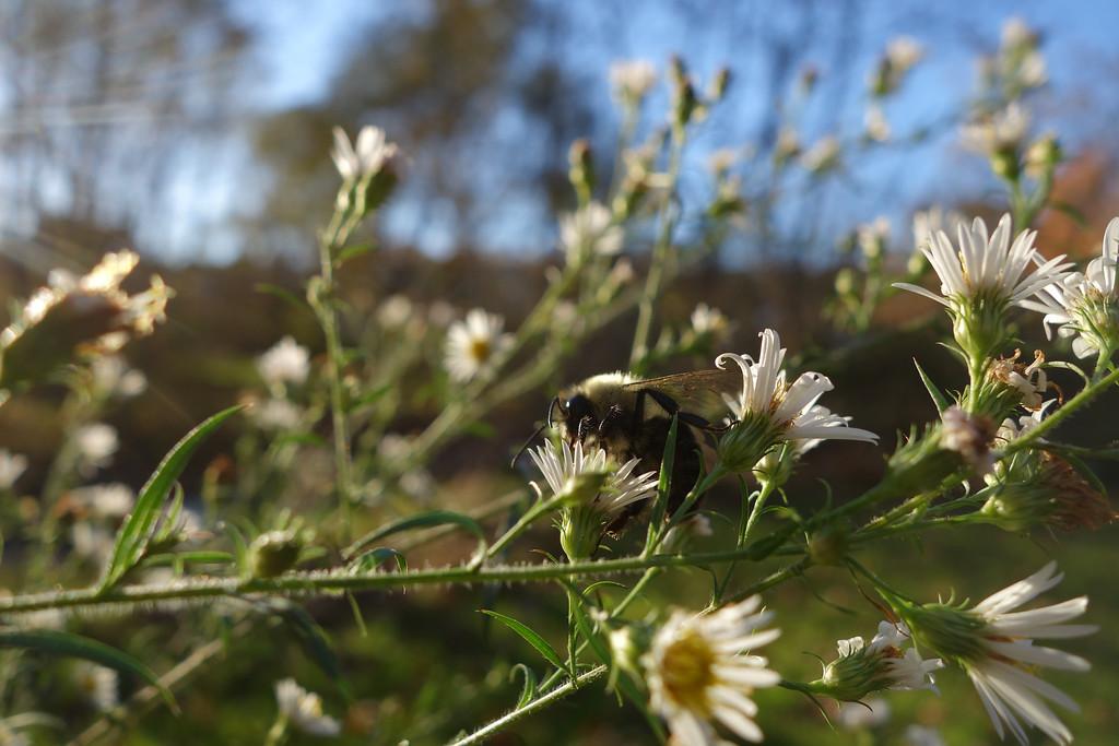 November 1 2013   Last call for nectar
