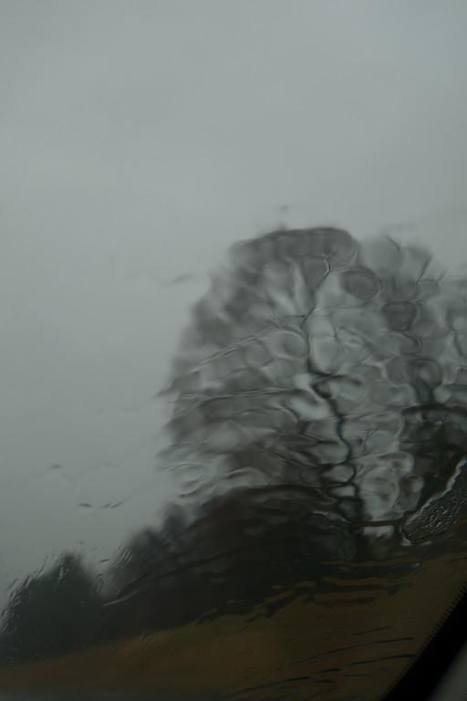 November 26 2013  Rainy tree