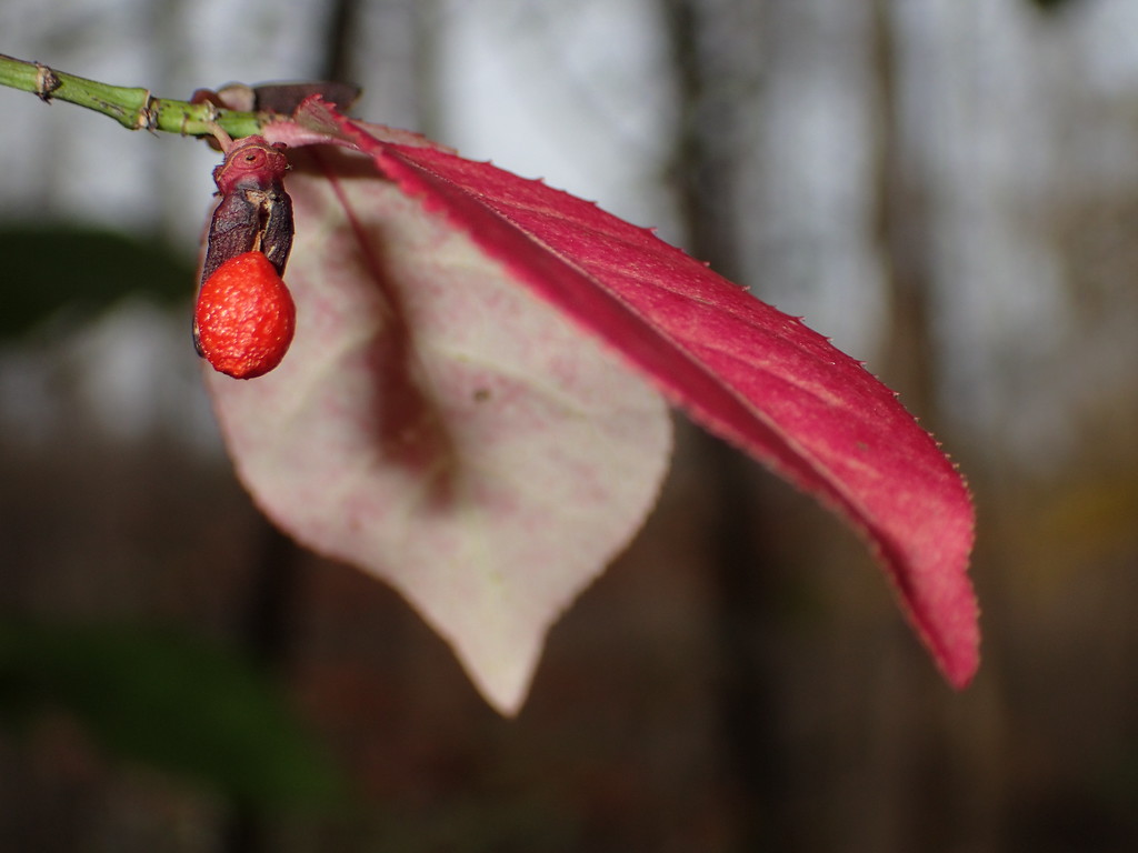 November 8 2014  Forest fruit