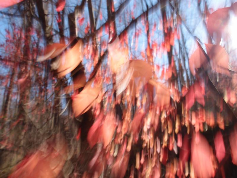 November 13 2012   Falling Leaves