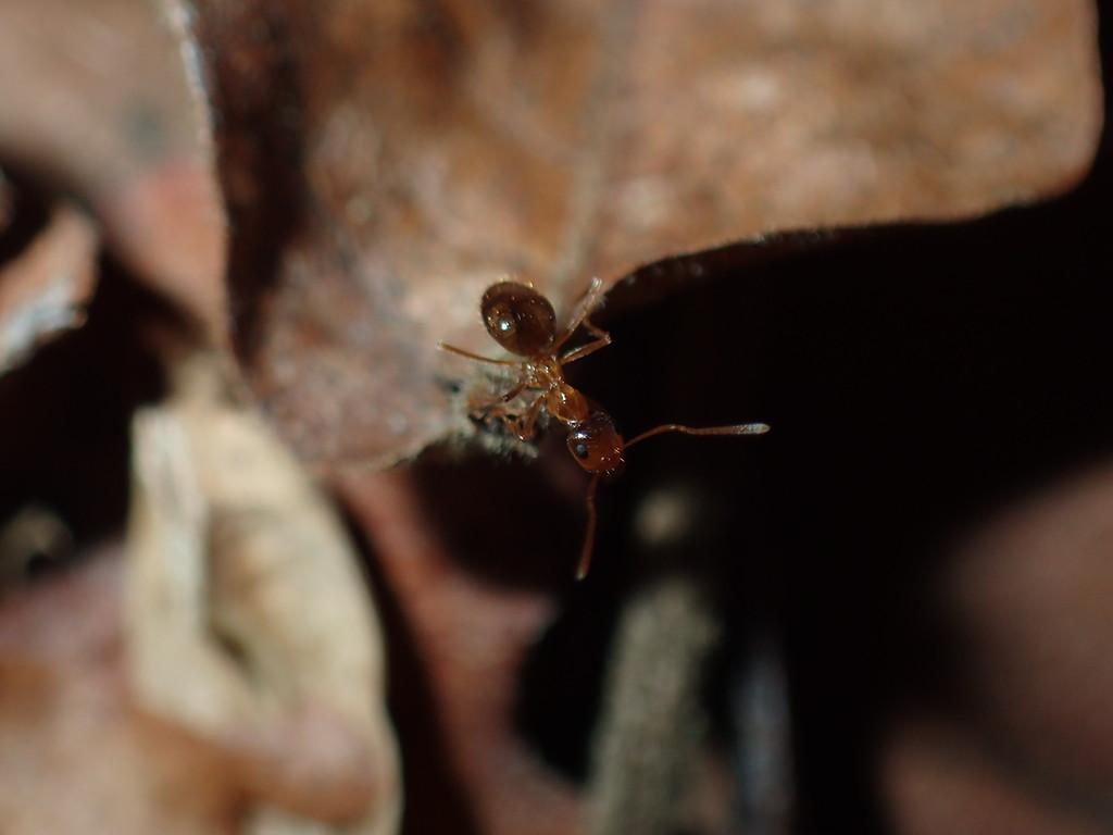 January 17 2015  Bold winter ant