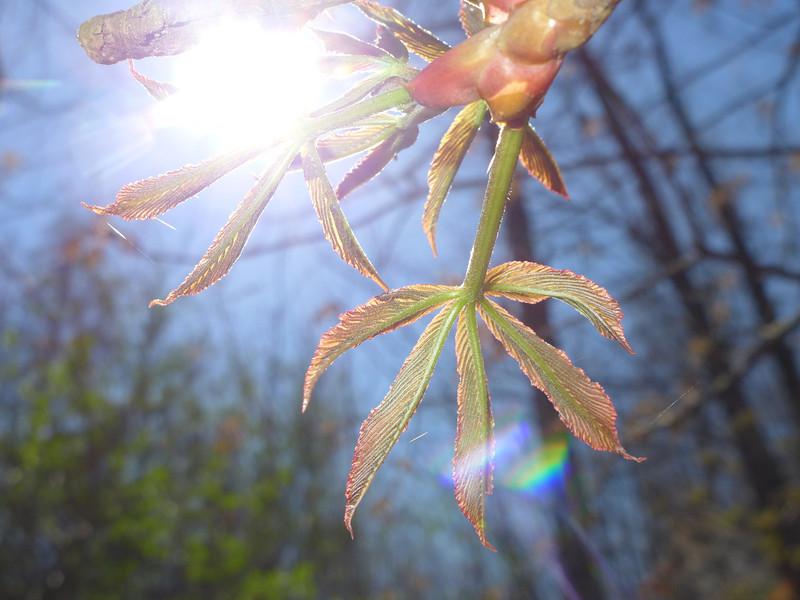 April 2 2013  Buckeye Catching the Sun