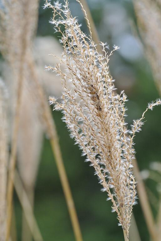 December 28 2012  Winter Grass