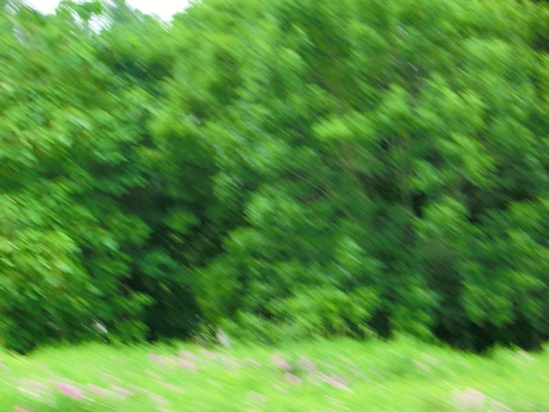 June 28 2011   Summer field
