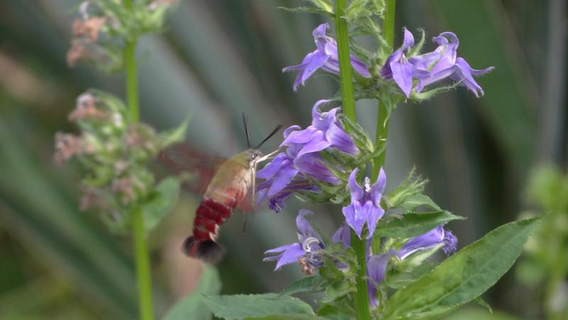 August 27 2011  Flower feast