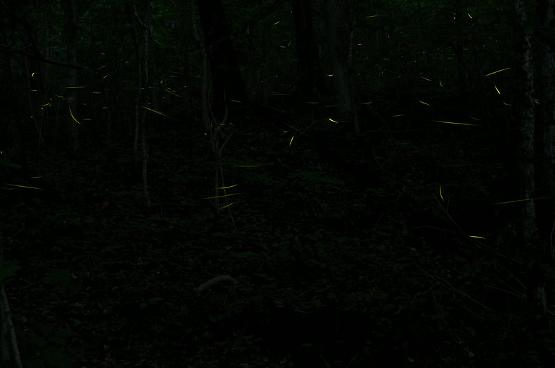 July 9 2014  Firefly trails