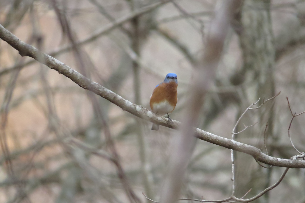 February 20 2014   Bluebirds are back