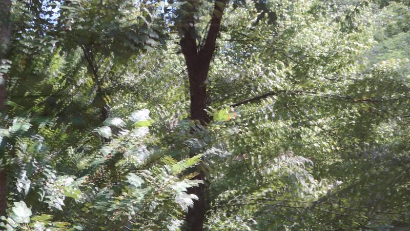 August 1 2011  Leafy ripple