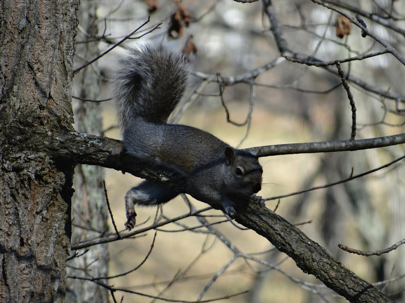 December 2 2012   Squirrel Stretch