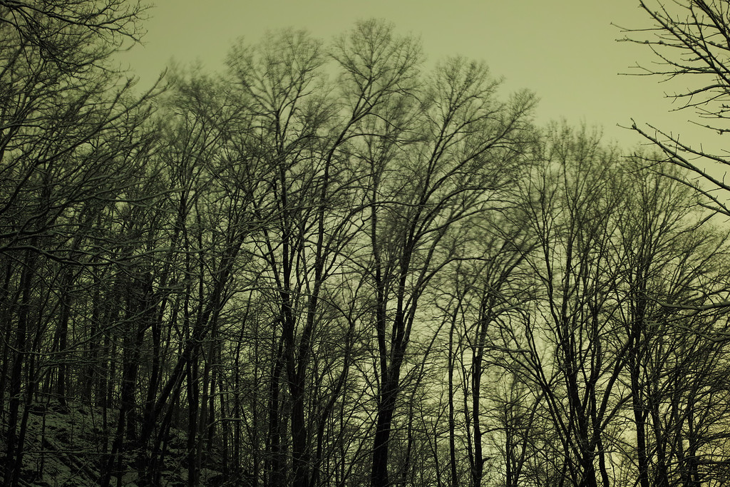 January 17 2013   Snowy Forest At Night